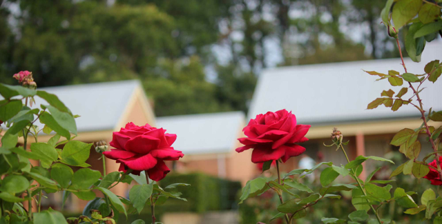 lodge_roses from entry photo